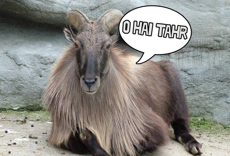 Ubuntu 14.04 LTS 代号定为 Trusty Tahr