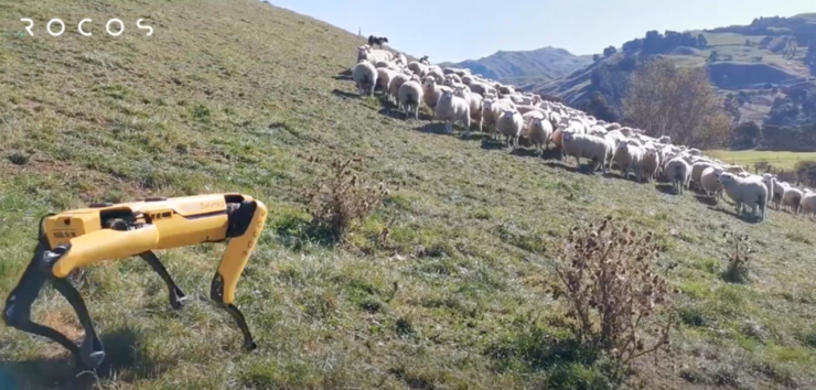 波士顿动力机器狗开始放羊,网友回复:人还没下岗,狗先失业了